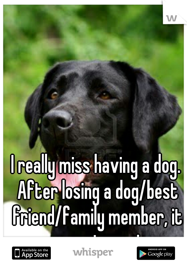I really miss having a dog. After losing a dog/best friend/family member, it never gets easier.