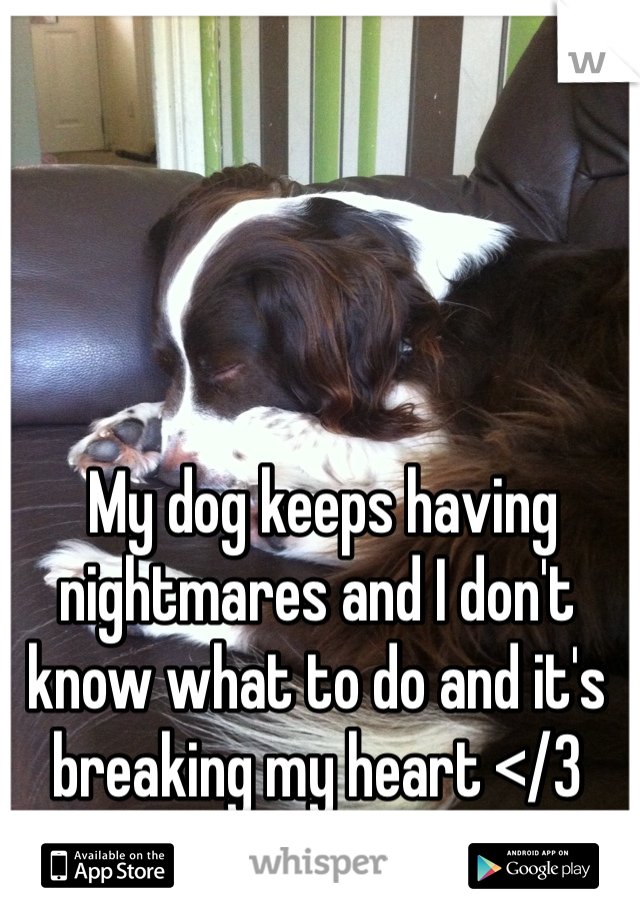 My dog keeps having nightmares and I don't know what to do and it's breaking my heart </3