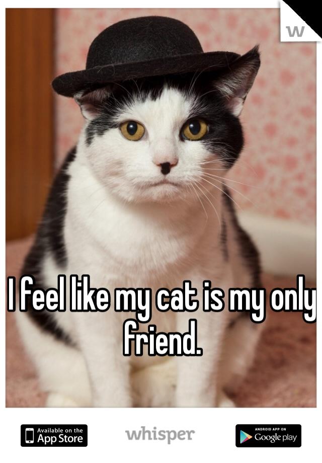 I feel like my cat is my only friend.