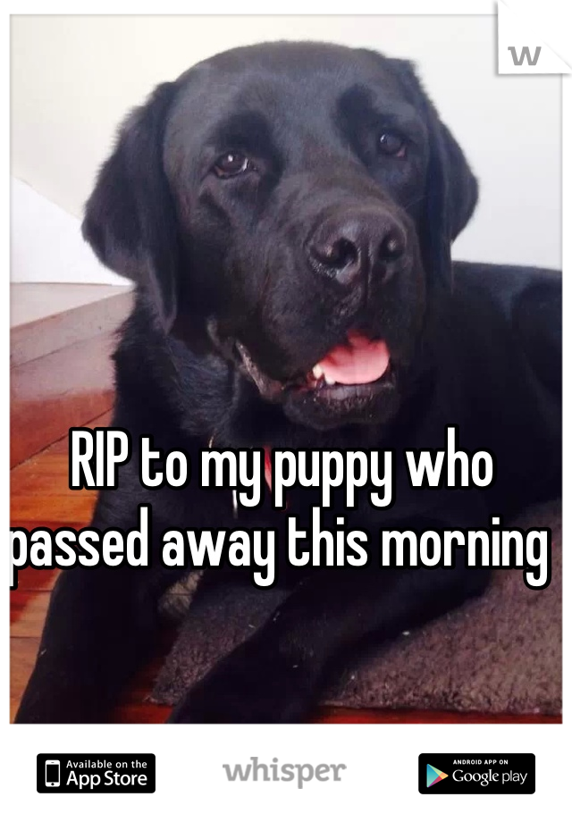 RIP to my puppy who passed away this morning