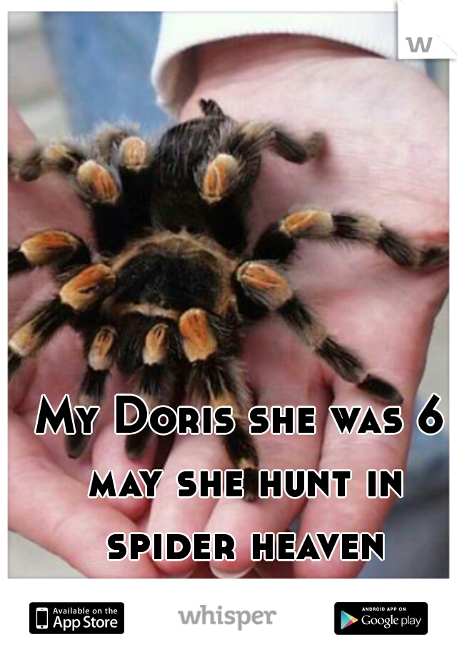 My Doris she was 6 may she hunt in spider heaven