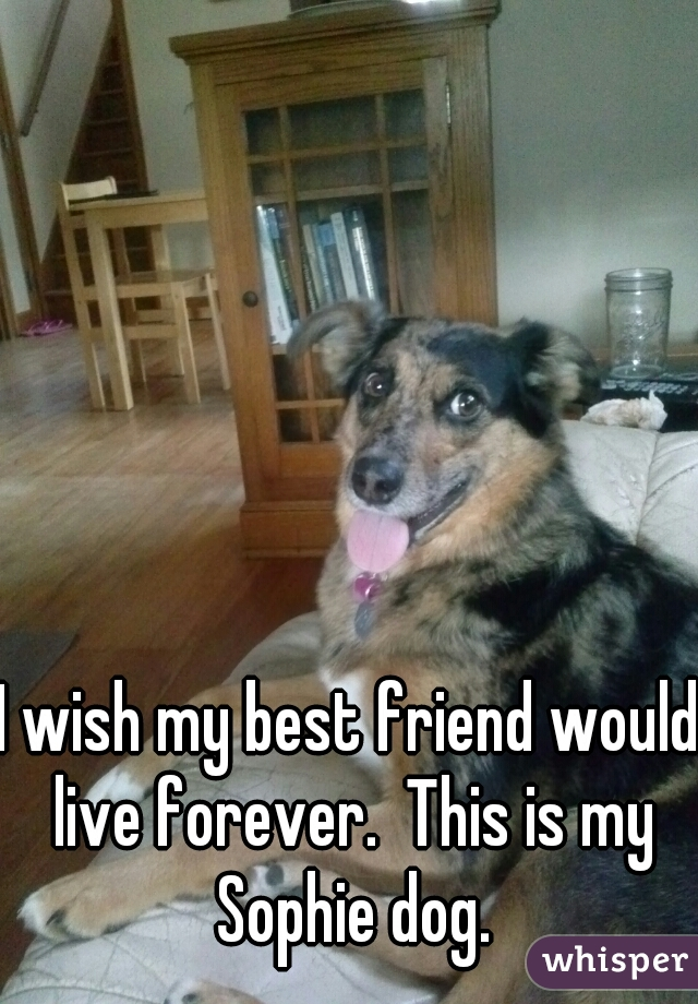 I wish my best friend would live forever.  This is my Sophie dog.
