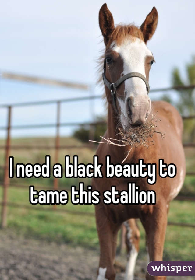 I need a black beauty to tame this stallion