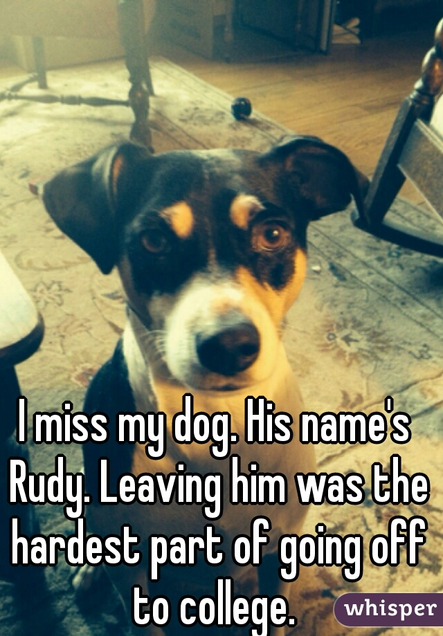 I miss my dog. His name's Rudy. Leaving him was the hardest part of going off to college.