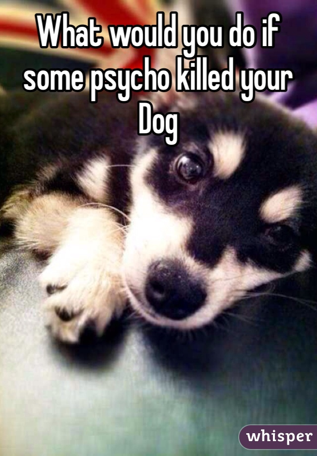 What would you do if some psycho killed your Dog