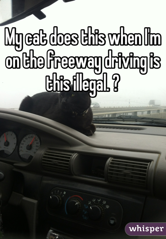 My cat does this when I'm on the freeway driving is this illegal. ?