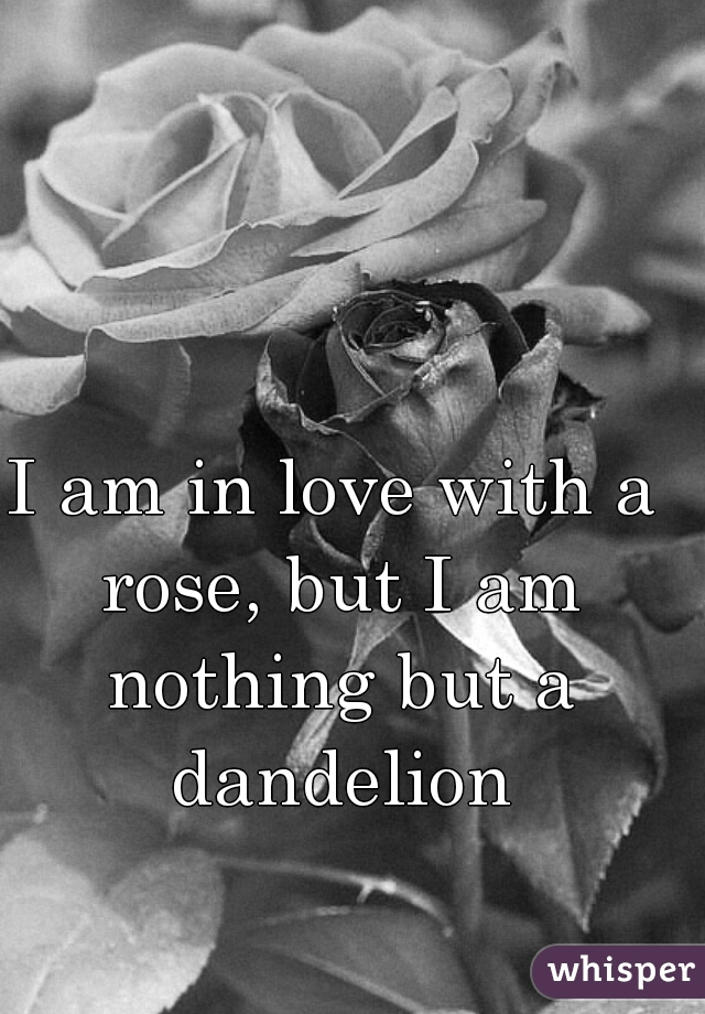 I am in love with a rose, but I am nothing but a dandelion