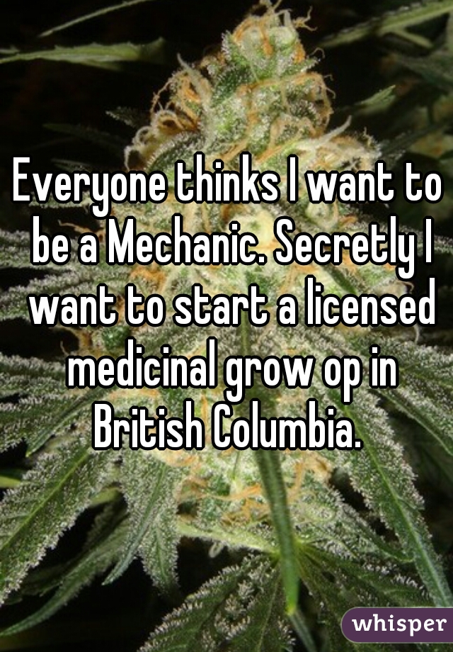 Everyone thinks I want to be a Mechanic. Secretly I want to start a licensed medicinal grow op in British Columbia.