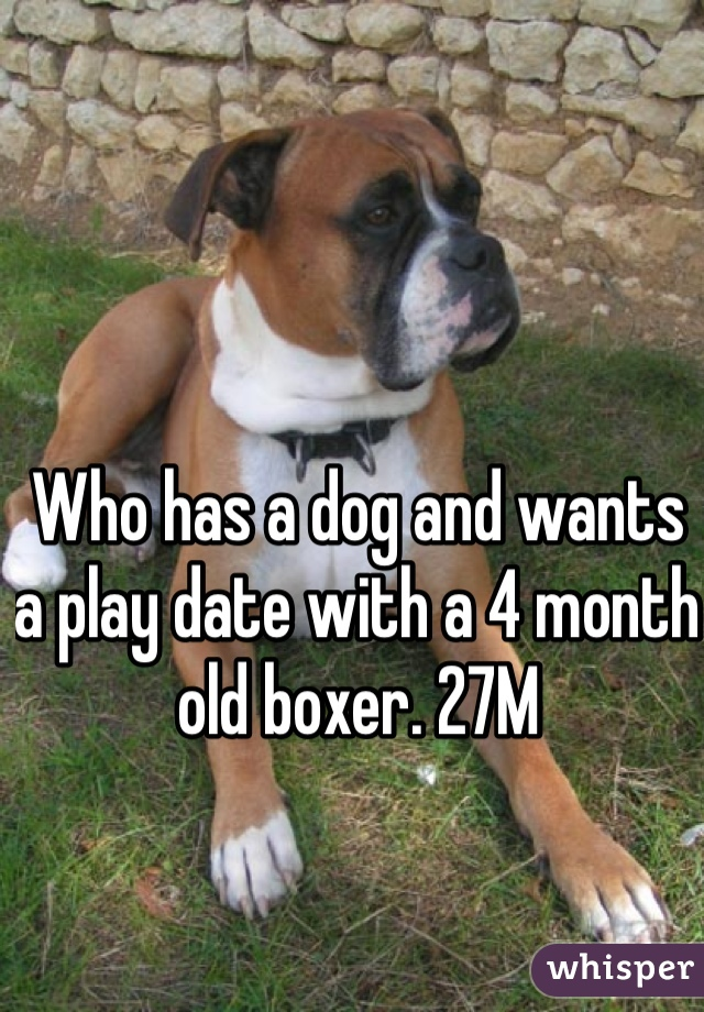 Who has a dog and wants a play date with a 4 month old boxer. 27M