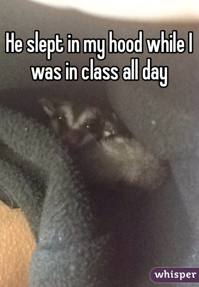 He slept in my hood while I was in class all day