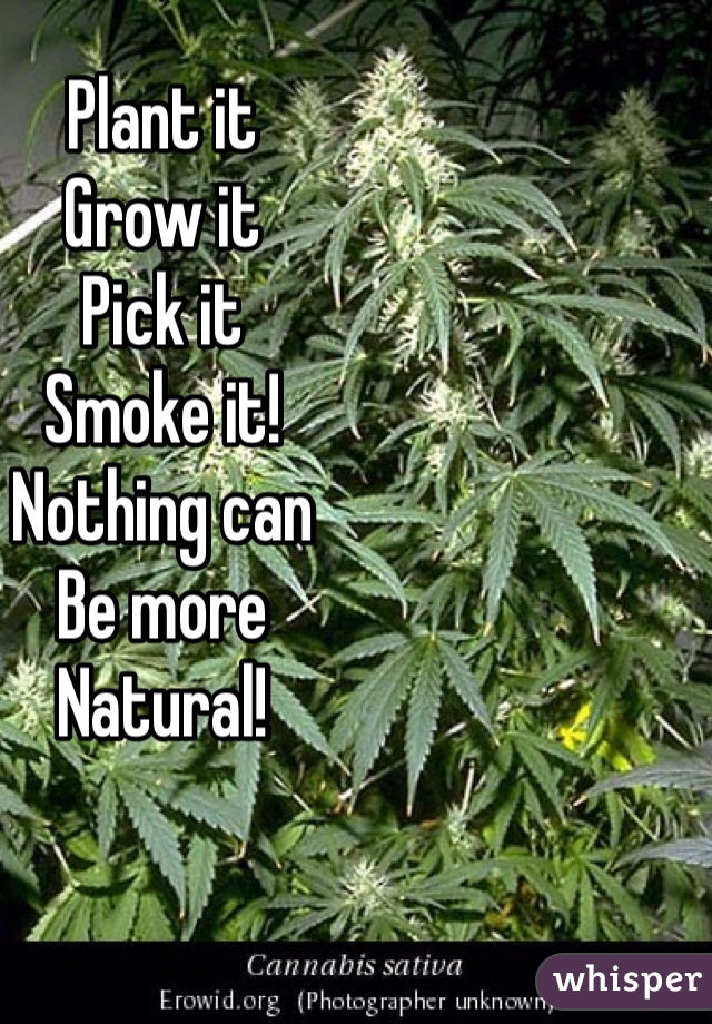 Plant it Grow it Pick it Smoke it! Nothing can Be more Natural!