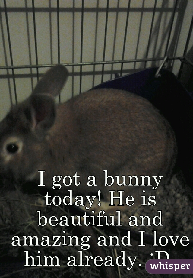 I got a bunny today! He is beautiful and amazing and I love him already. :D