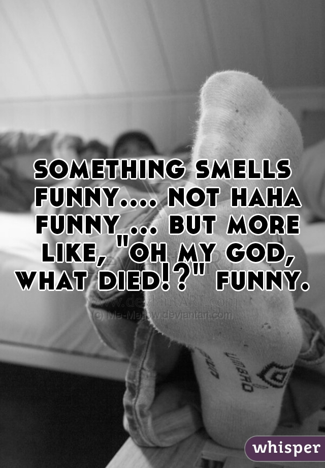 """something smells funny.... not haha funny ... but more like, """"oh my god, what died!?"""" funny."""