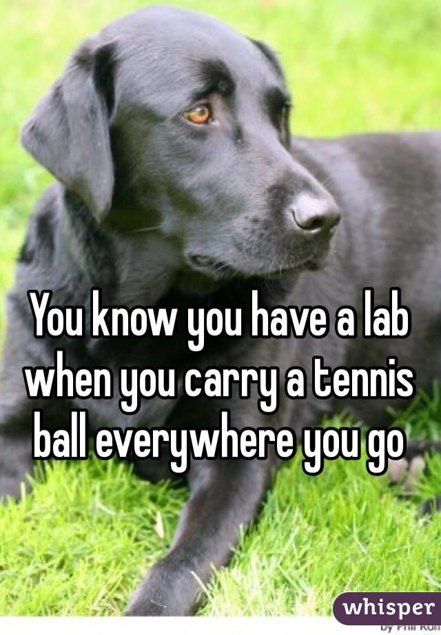 You know you have a lab when you carry a tennis ball everywhere you go