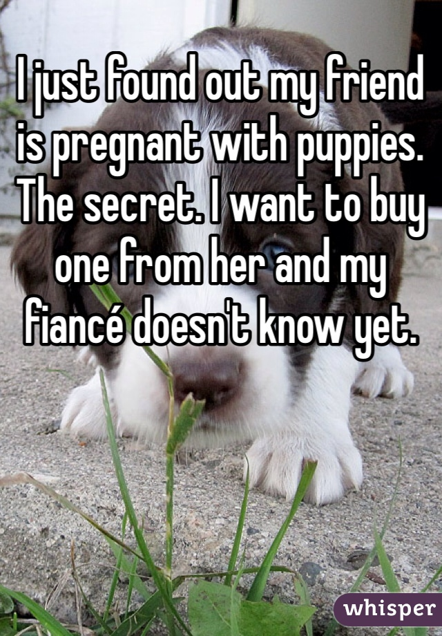 I just found out my friend is pregnant with puppies. The secret. I want to buy one from her and my fiancé doesn't know yet.