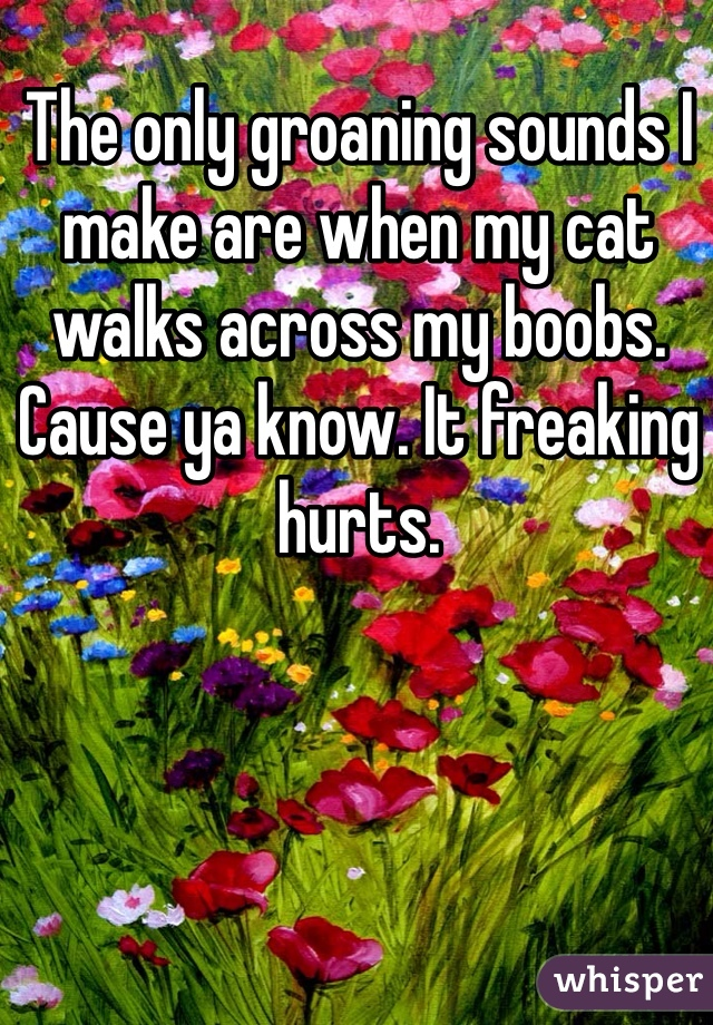 The only groaning sounds I make are when my cat walks across my boobs. Cause ya know. It freaking hurts.