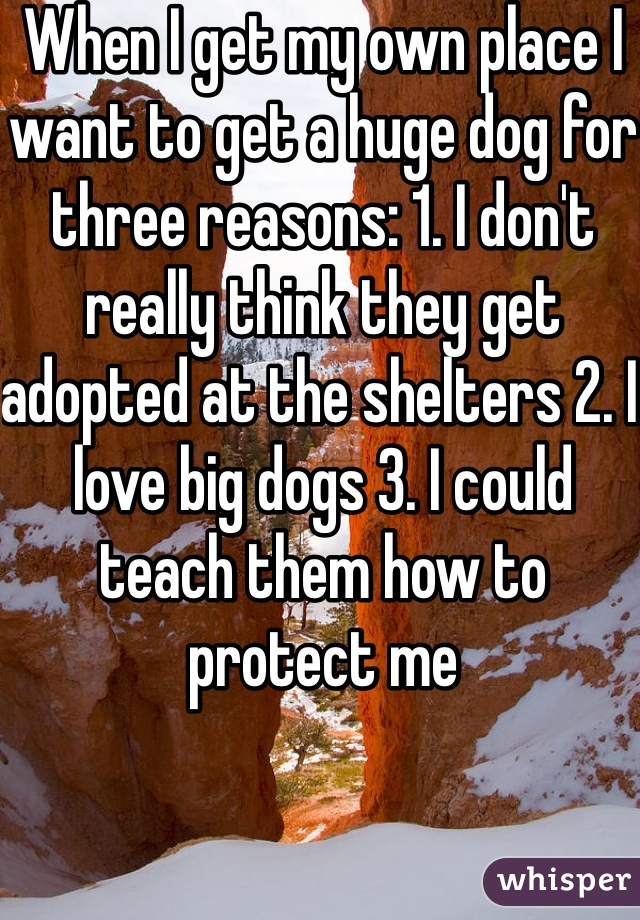 When I get my own place I want to get a huge dog for three reasons: 1. I don't really think they get adopted at the shelters 2. I love big dogs 3. I could teach them how to protect me