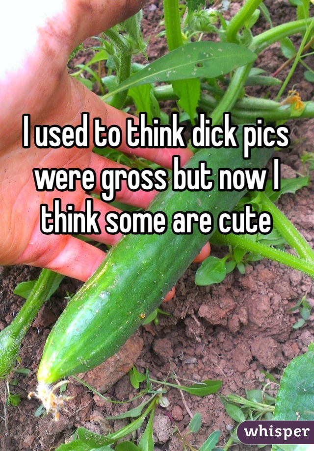 I used to think dick pics were gross but now I think some are cute