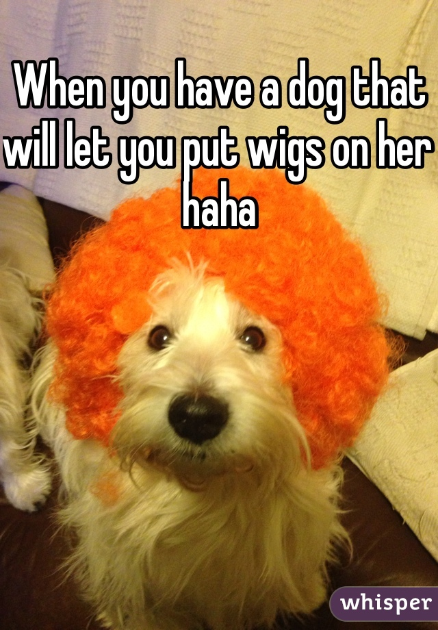 When you have a dog that will let you put wigs on her haha