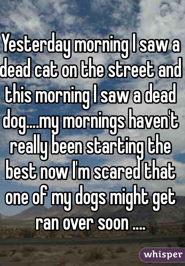 Yesterday morning I saw a dead cat on the street and this morning I saw a dead dog....my mornings haven't really been starting the best now I'm scared that one of my dogs might get ran over soon ....