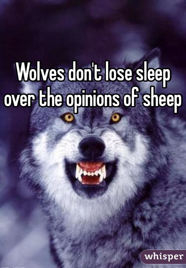 Wolves don't lose sleep over the opinions of sheep