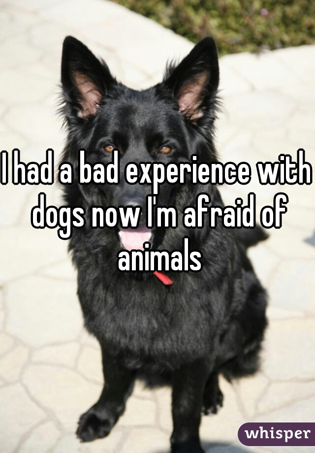 I had a bad experience with dogs now I'm afraid of animals