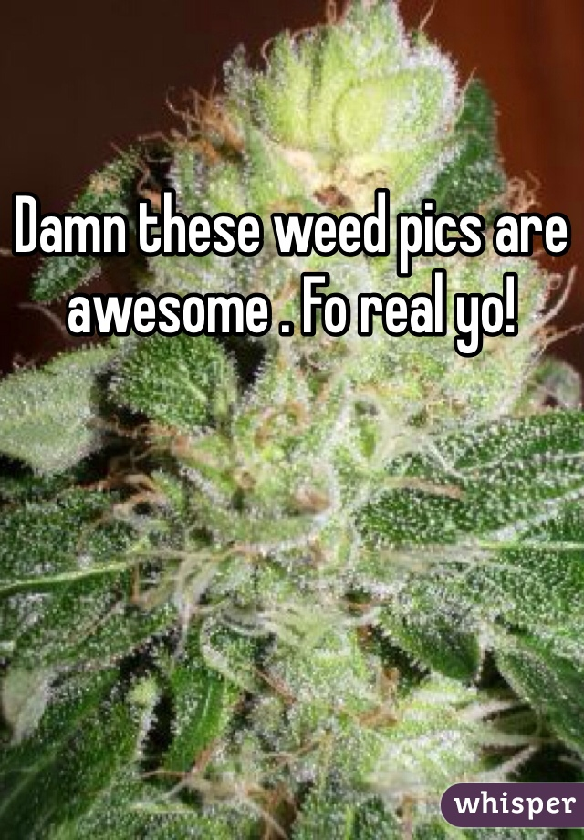 Damn these weed pics are awesome . Fo real yo!