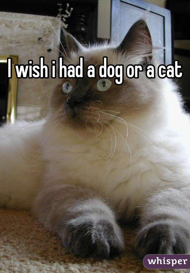 I wish i had a dog or a cat