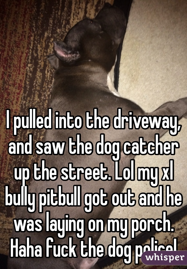 I pulled into the driveway, and saw the dog catcher up the street. Lol my xl bully pitbull got out and he was laying on my porch. Haha fuck the dog police!