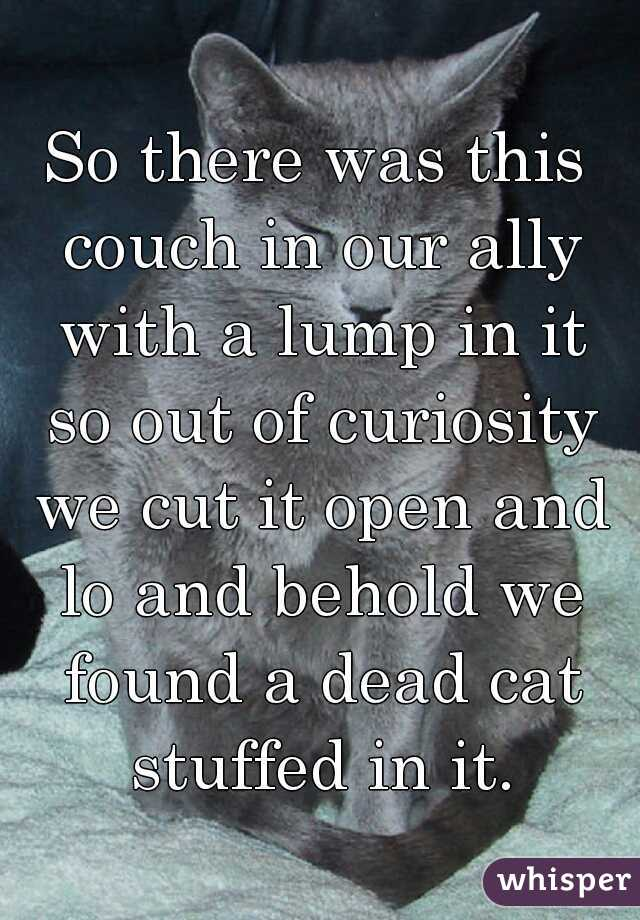 So there was this couch in our ally with a lump in it so out of curiosity we cut it open and lo and behold we found a dead cat stuffed in it.