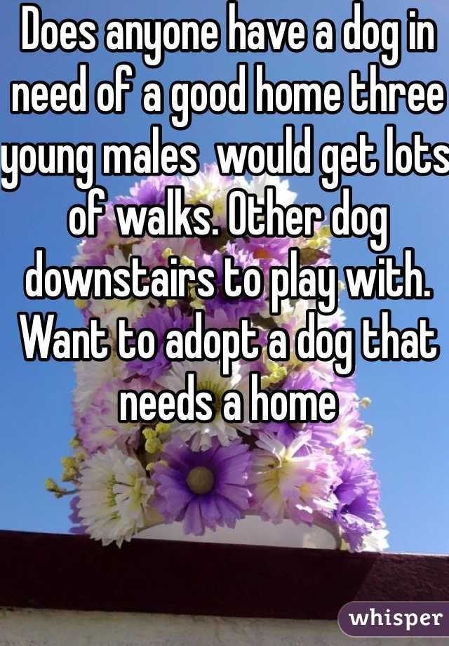Does anyone have a dog in need of a good home three young males  would get lots of walks. Other dog downstairs to play with. Want to adopt a dog that needs a home