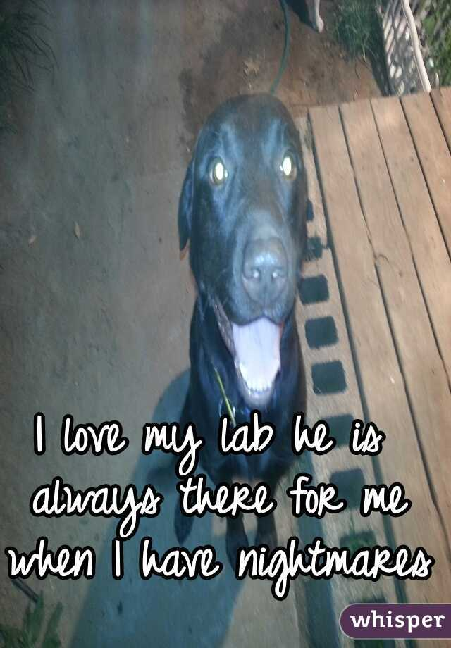 I love my lab he is always there for me when I have nightmares