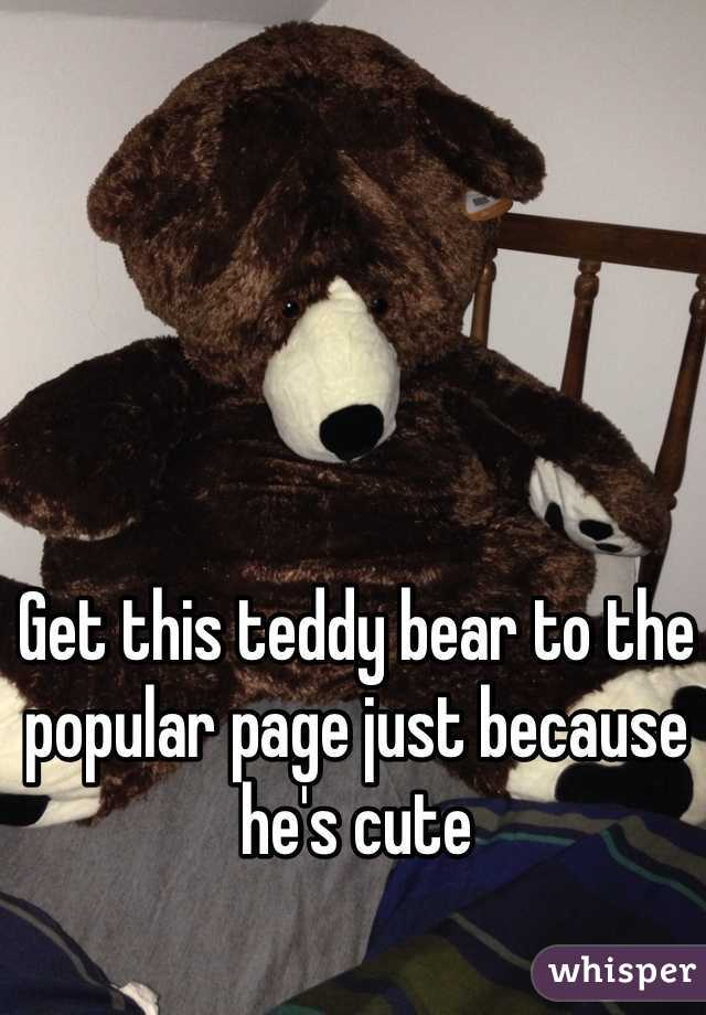 Get this teddy bear to the popular page just because he's cute