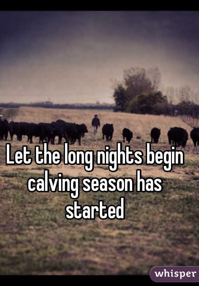Let the long nights begin calving season has started