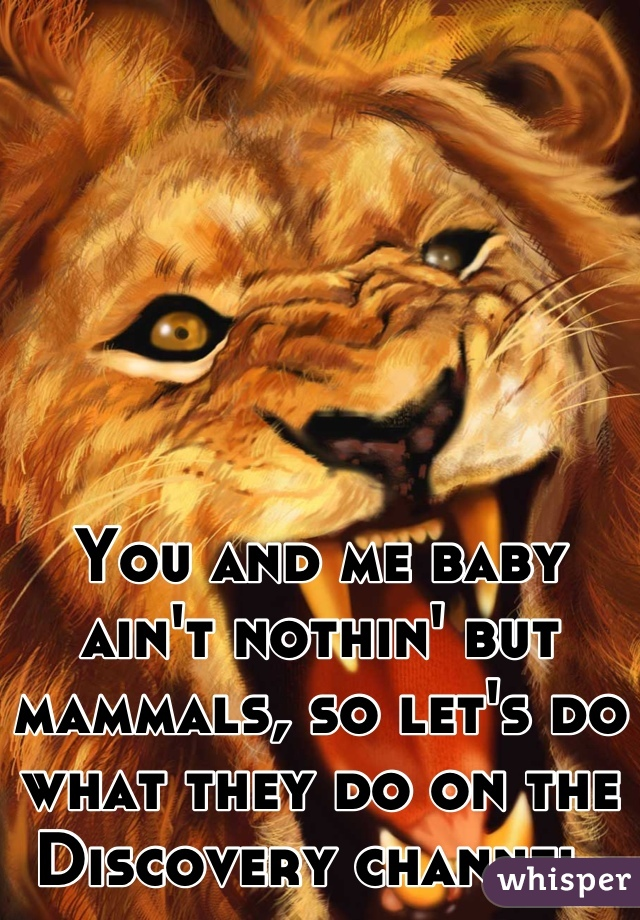 You and me baby ain't nothin' but mammals, so let's do what they do on the Discovery channel.
