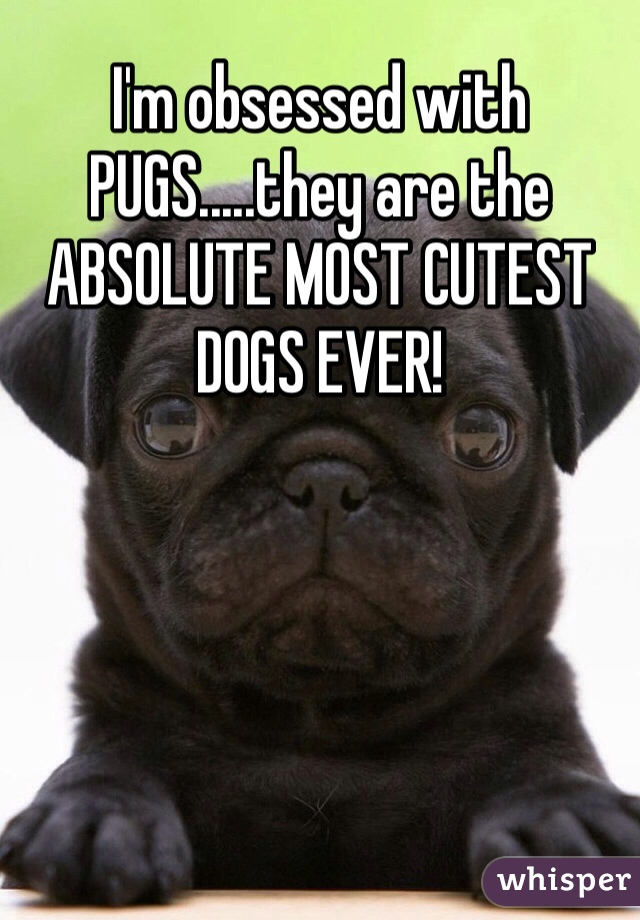 I'm obsessed with PUGS.....they are the ABSOLUTE MOST CUTEST DOGS EVER!