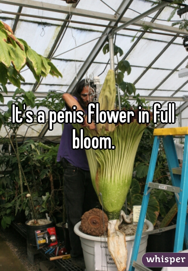 It's a penis flower in full bloom.