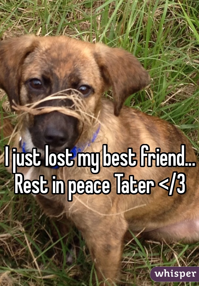 I just lost my best friend... Rest in peace Tater </3
