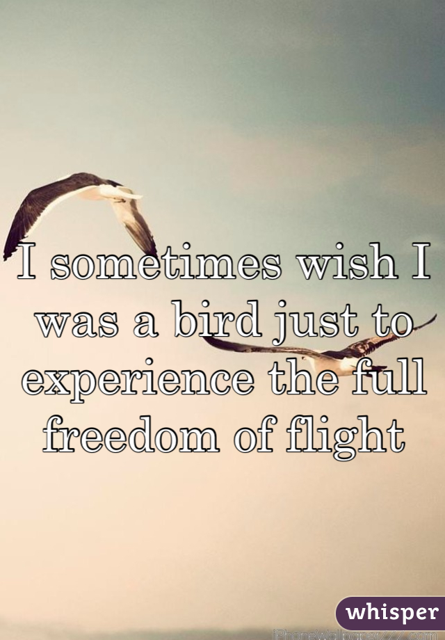 I sometimes wish I was a bird just to experience the full freedom of flight