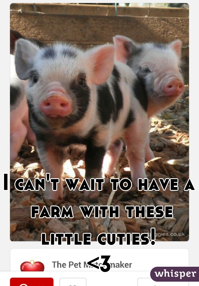 I can't wait to have a farm with these little cuties!  <3