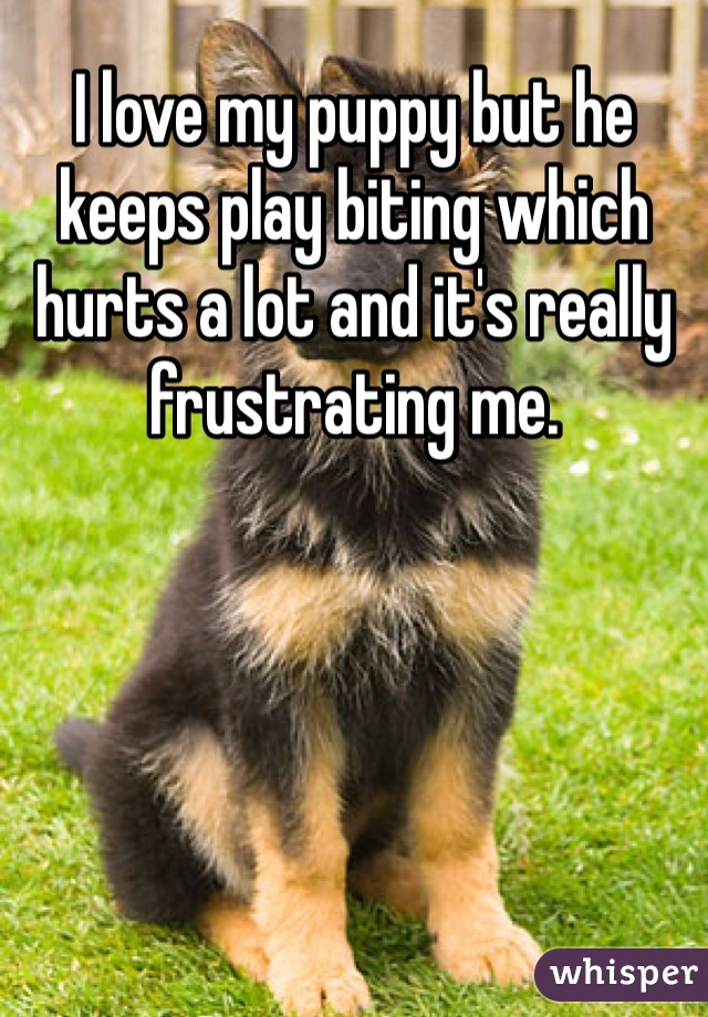 I love my puppy but he keeps play biting which hurts a lot and it's really frustrating me.