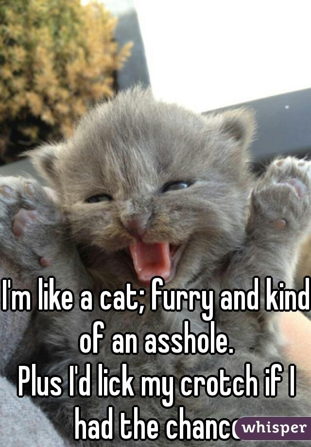I'm like a cat; furry and kind of an asshole.   Plus I'd lick my crotch if I had the chance