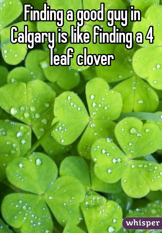 Finding a good guy in Calgary is like finding a 4 leaf clover