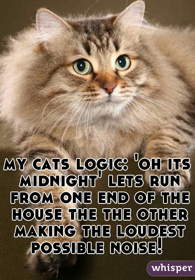 my cats logic: 'oh its midnight' lets run from one end of the house the the other making the loudest possible noise!