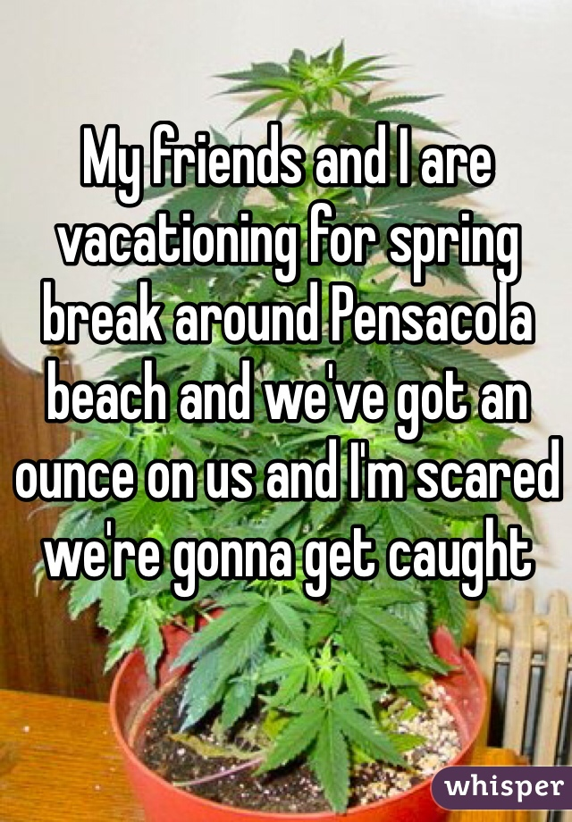 My friends and I are vacationing for spring break around Pensacola beach and we've got an ounce on us and I'm scared we're gonna get caught