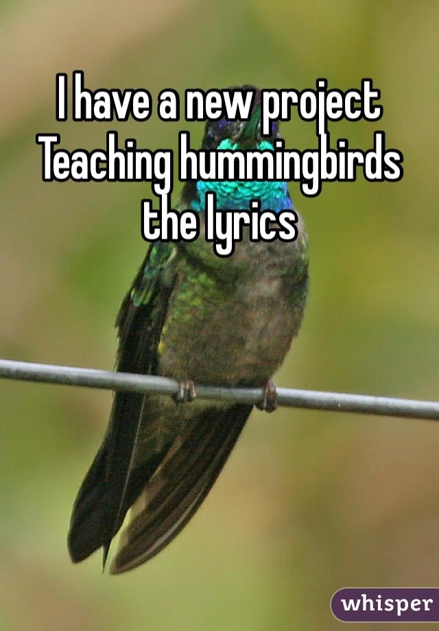I have a new project Teaching hummingbirds the lyrics