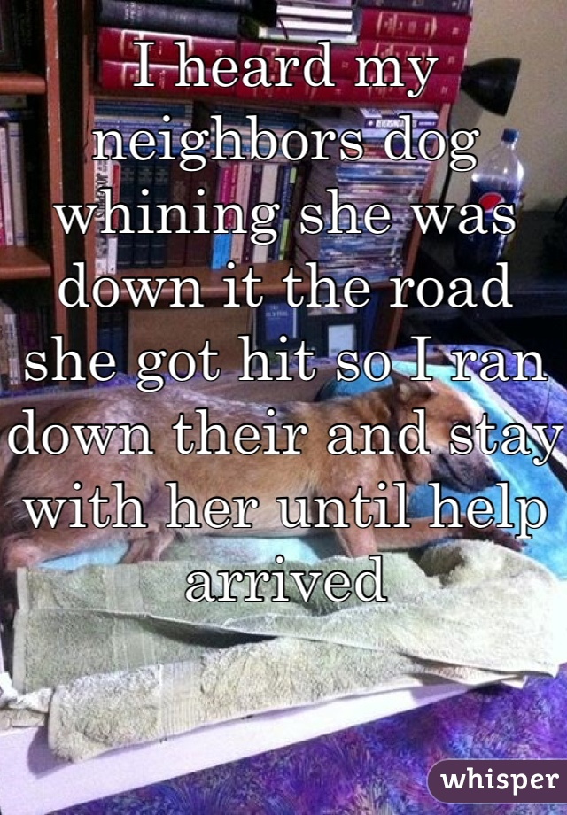 I heard my neighbors dog whining she was down it the road she got hit so I ran down their and stay with her until help arrived