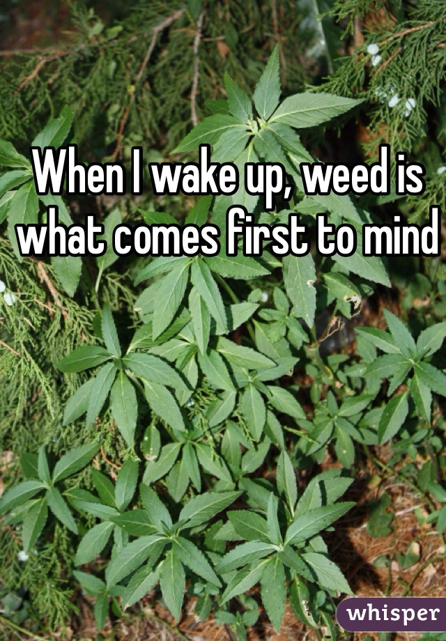 When I wake up, weed is what comes first to mind