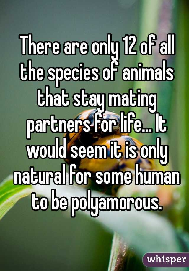 There are only 12 of all the species of animals that stay mating partners for life... It would seem it is only natural for some human to be polyamorous.