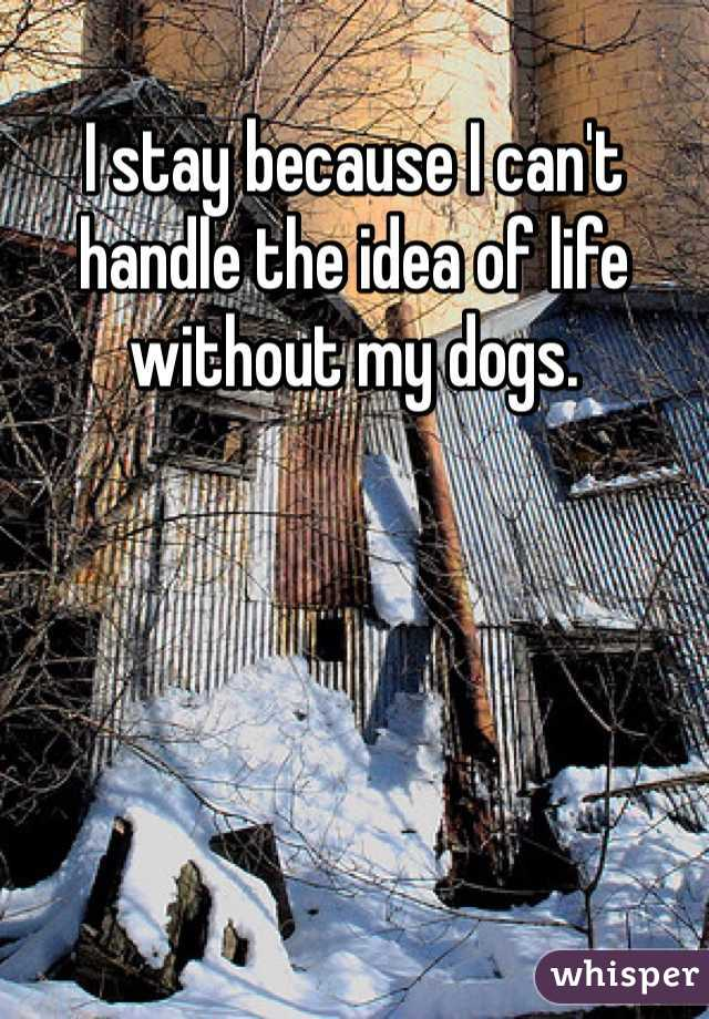I stay because I can't handle the idea of life without my dogs.